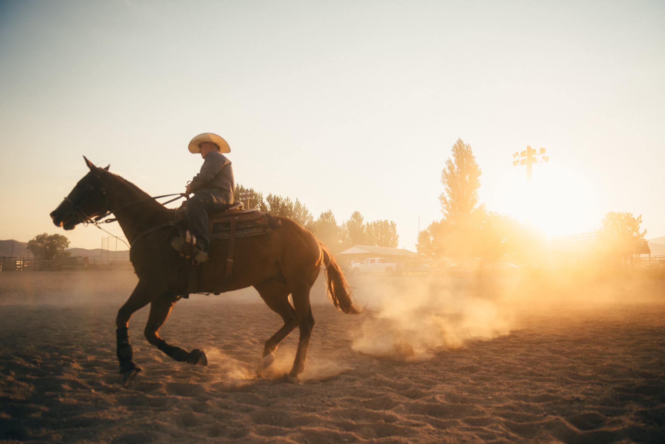 cavalo de rodeio