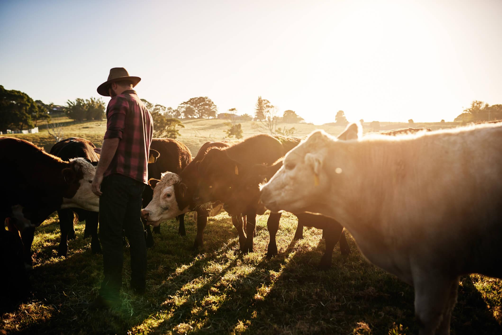 como ganhar dinheiro na fazenda
