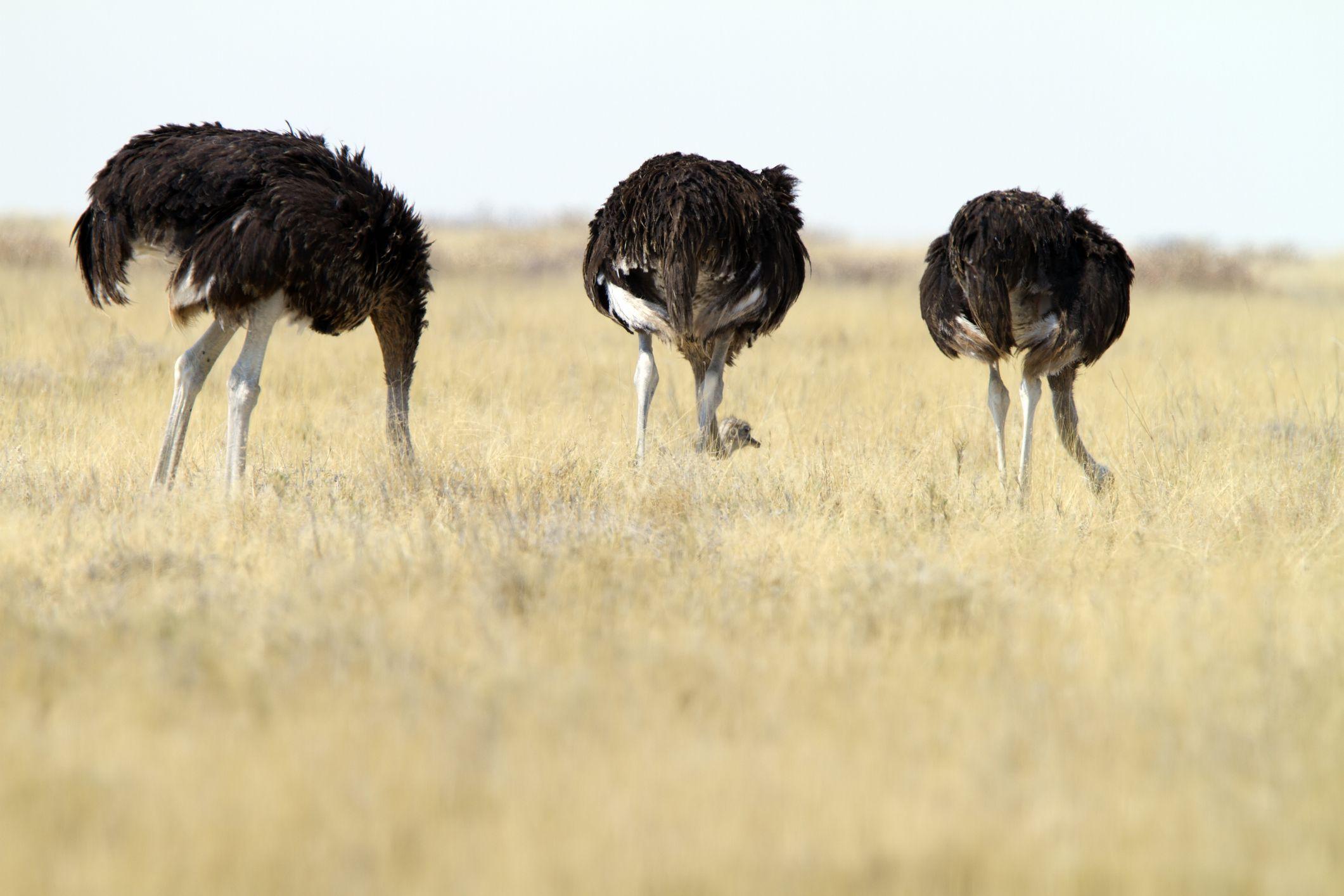 bota de couro de avestruz
